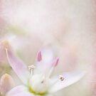 Jade Flower by Beth Mason