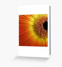 Colourful daisy Greeting Card