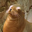 Seal with a Smile by AnnDixon
