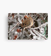 Mourning Dove in the Ice Storm Canvas Print