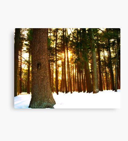 On a Winters Day   Canvas Print