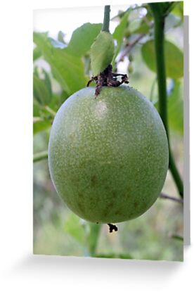 An Unripe Passionfruit by STHogan