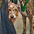 Peeking Hound by lincolngraham