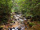Cave Creek above Natural Bridge #1 by Odille Esmonde-Morgan