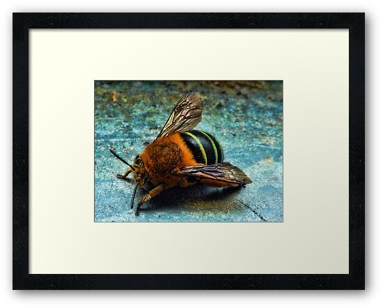"""Bumble Bee"" by debsphotos"