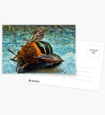 """Bumble Bee"" Postcards"