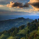 Afternoon Delight at Barrington Tops by Tatiana R