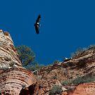 Condor Above Angel's Landing by Clayhaus