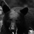 B&W Bear by smalletphotos