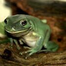 Freddie...The Green Tree Frog by Rosemaree