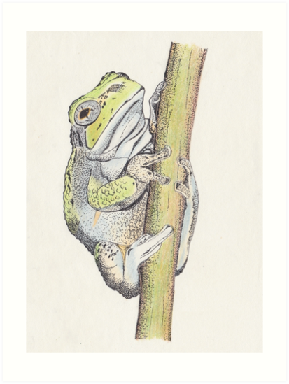 Tree frog drawn for Papa, #2  by DigitalEurydice