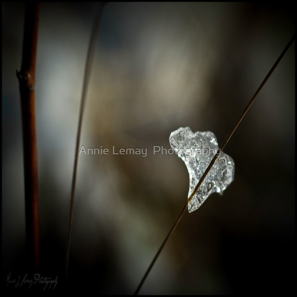 Ice of Africa by Annie Lemay  Photography
