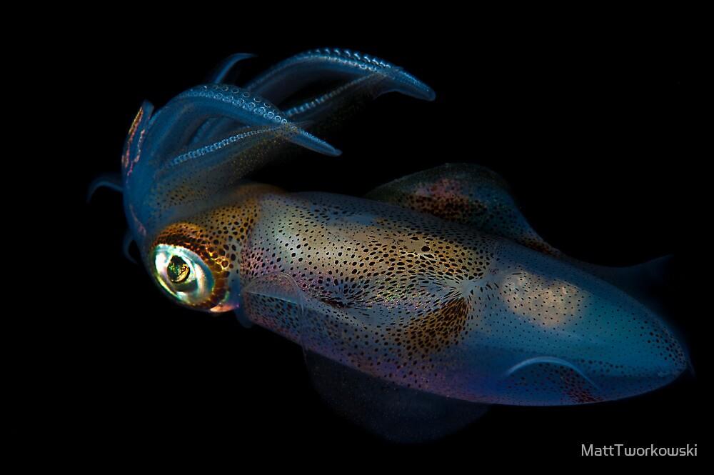 Southern Calamari Squid by MattTworkowski