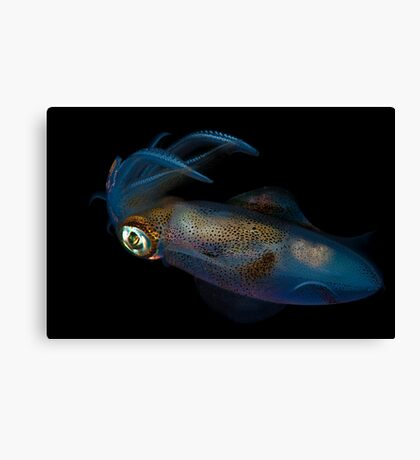 Southern Calamari Squid Canvas Print