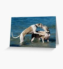 Whippets at Play Greeting Card