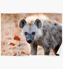 YEAH, I AM WATCHING YOU! - Spotted Hyaena - Crocuta crocuta Poster