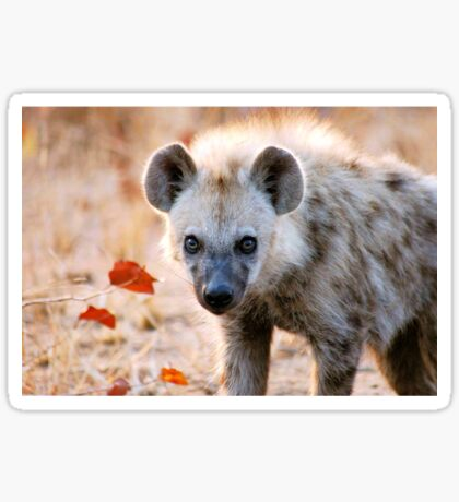 YEAH, I AM WATCHING YOU! - Spotted Hyaena - Crocuta crocuta Sticker