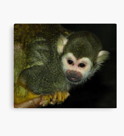 Curious (Squirrel Monkey) Canvas Print