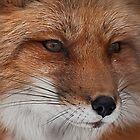 Foxy Baby von Wanda Staples