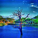 Dead tree in lake by jalewin