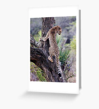 Cheetah Up Tree Greeting Card