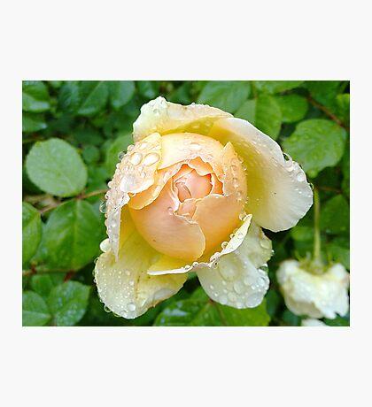 Rosey Tears Photographic Print