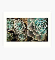 Succulents/Diptych Art Print
