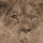 Piercing Eyes by Donald  Mavor