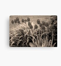 old timey tulips Canvas Print