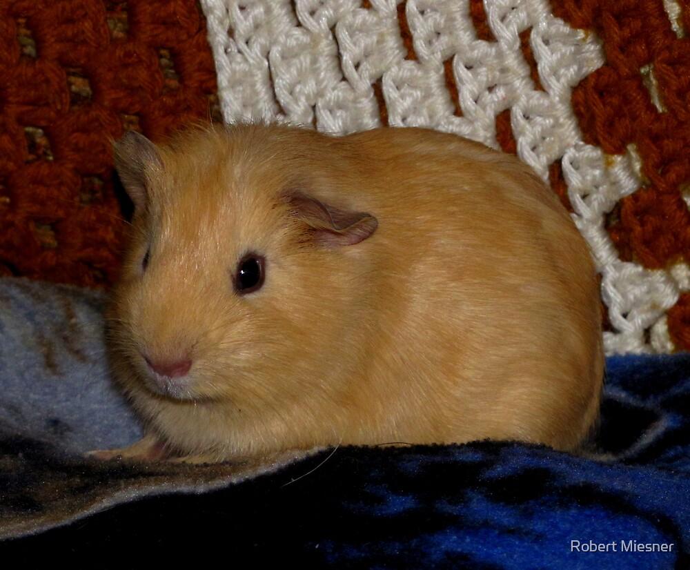 Tanner (My Pet Guinea Pig) by Robert Miesner