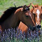 Two Horses by dazzleng