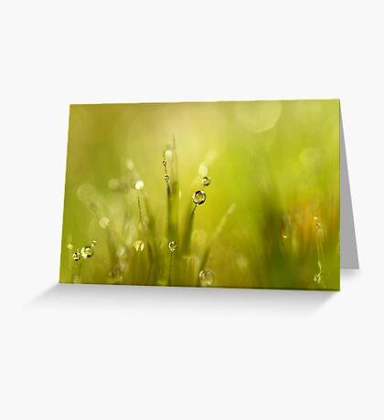 Sunshine Moss Greeting Card
