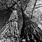 Dancing Trees by ser-y-star
