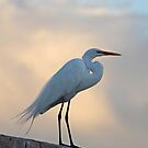 Snowy Egret At Sunset by SuddenJim