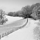 A Winter Walk by Jane Best