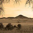 Haystack Mountain - Boulder County Colorado - Sepia Print by Bo Insogna