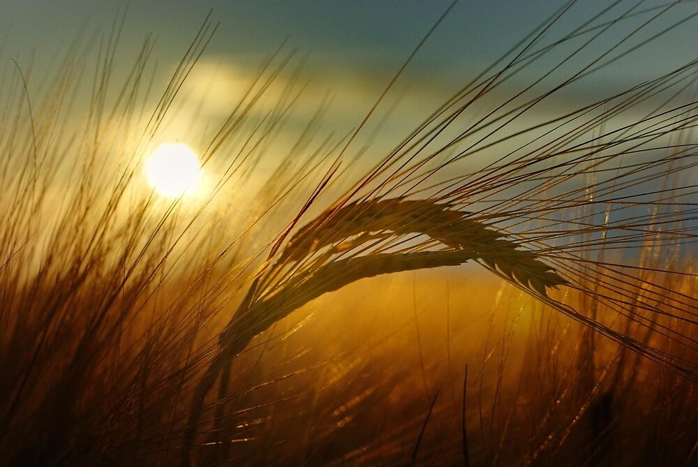 Sunset crop by Steve Pereira