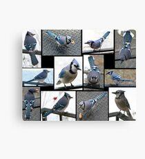 Jazzy Blue Jays Canvas Print