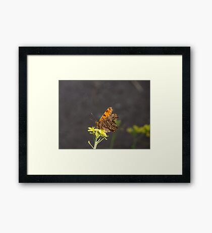 Alighitng On a Flower Framed Print