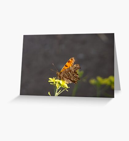 Alighitng On a Flower Greeting Card