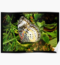 Butterfly (Australia) ~ Orange Lacewing Poster
