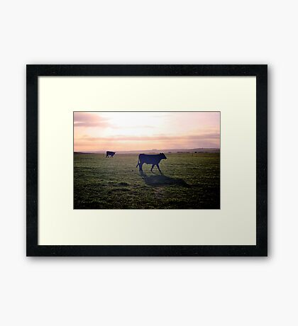 Cow Silhouette Framed Print