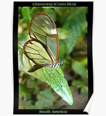 Butterfly (S. America, Costa Rica) ~ Glasswing Poster