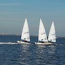 sailboat race by nancy dixon