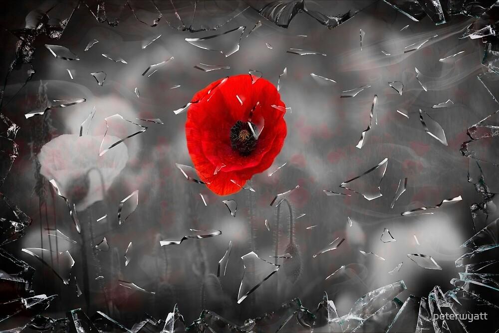 glass poppy by peter wyatt