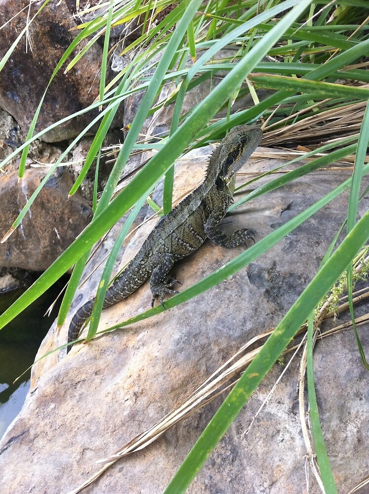 Lizard resting on the rocks by the lake by FatLikeSnorlax