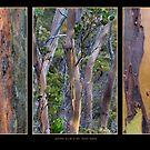 Gum Trees at Lake St Clair by Werner Padarin