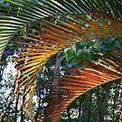 Golden Palm Leaves by aussiebushstick