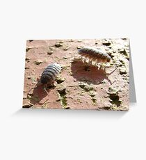 armadillo bugs (woodlice on a brick) Greeting Card