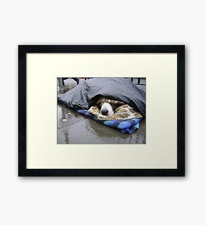 Dumper (street seller's dog) Framed Print